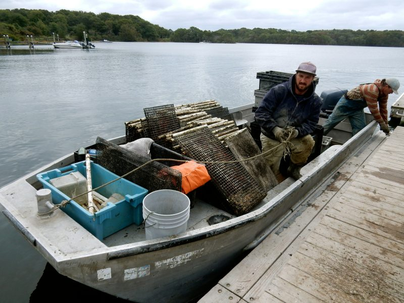 oyster-farmers-matunuck-oyster-farm-s-kingston-ri
