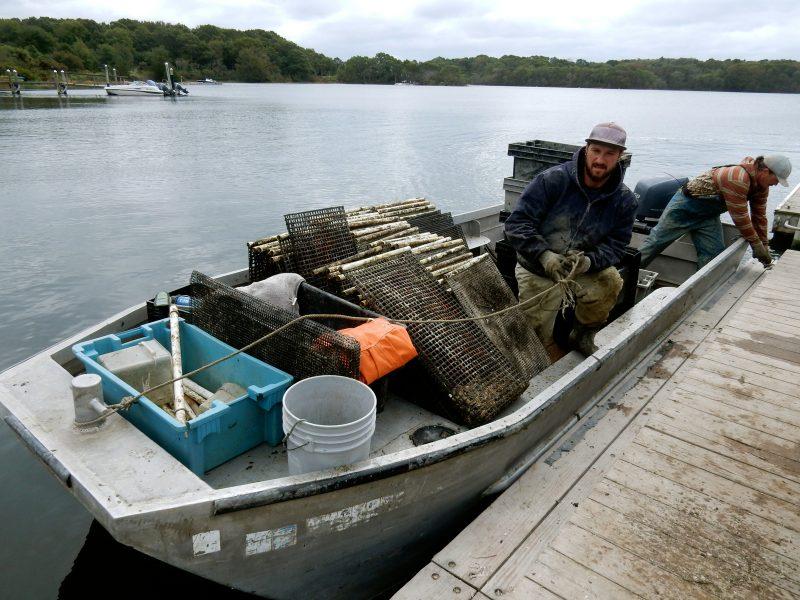 oyster-farmers-matunuck-oyster-farm-s-kingston-ri