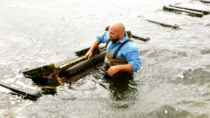 oyster-growing-perry-raso-matunuck-oysters-ri