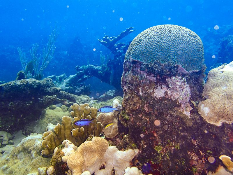 Coral Reef - Playa Coral - Varadero Cuba