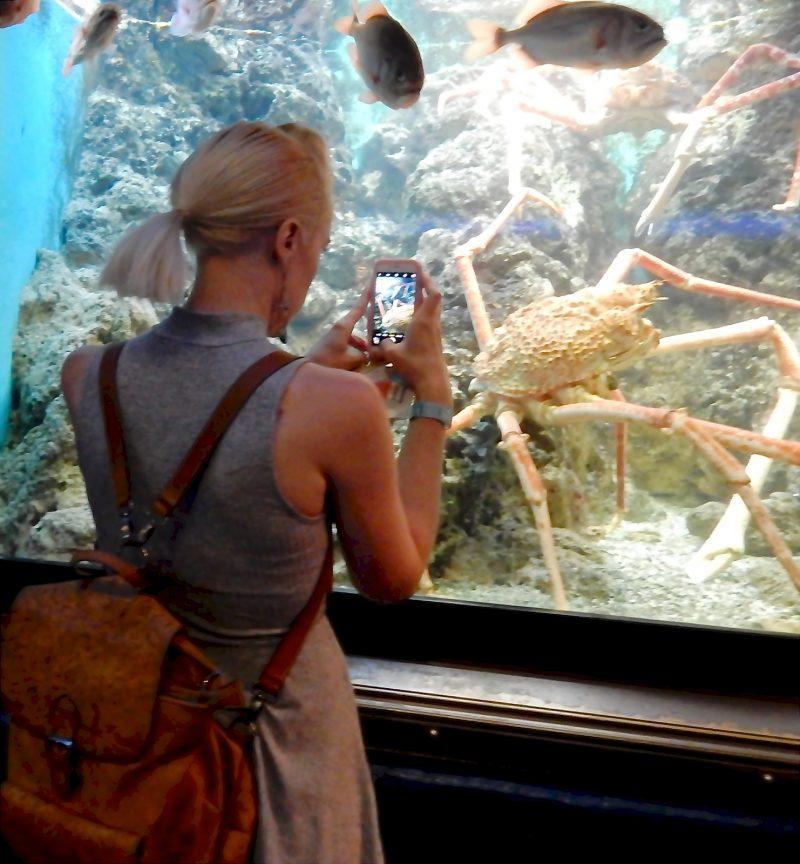shed-aquarium-chicago