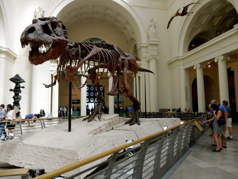 sue-field-museum-of-natural-history-chicago-il
