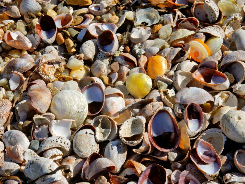 shells-on-reel-point-preserve-shelter-island-ny