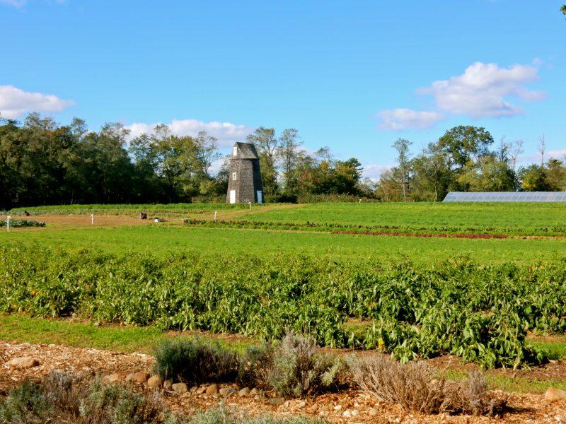sylvester-manor-educational-farm-shelter-island-ny
