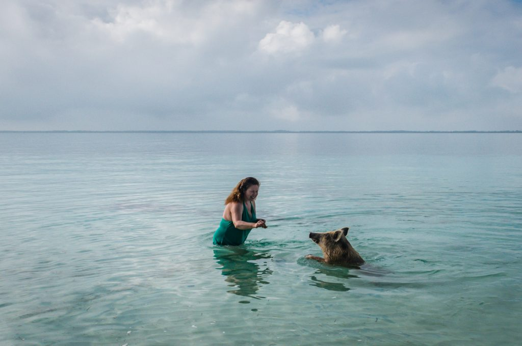 Sandra Foyt feeding pig swimming in ocean in Bahamas excursion.