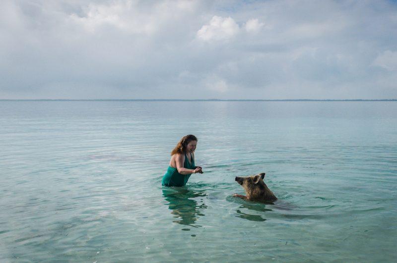 Swim with Pigs