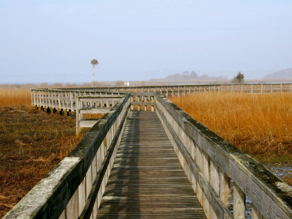 Boardwalk to Munn Point Southampton