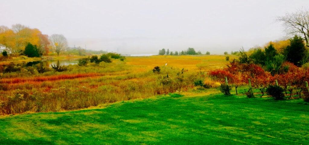Saltwater Farm Vineyard vista