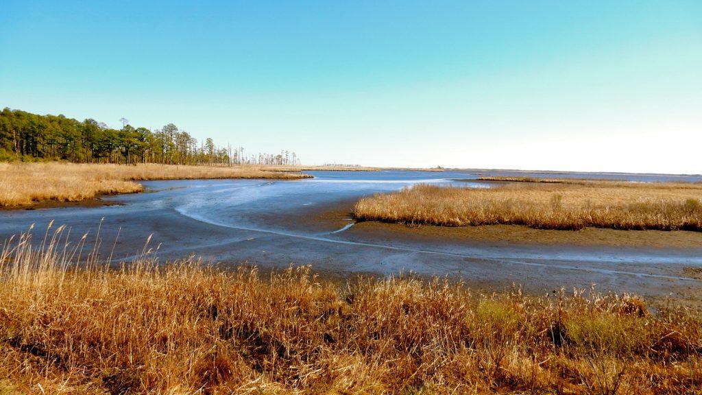 Blackwater Wildlife Refuge, Cambridge MD