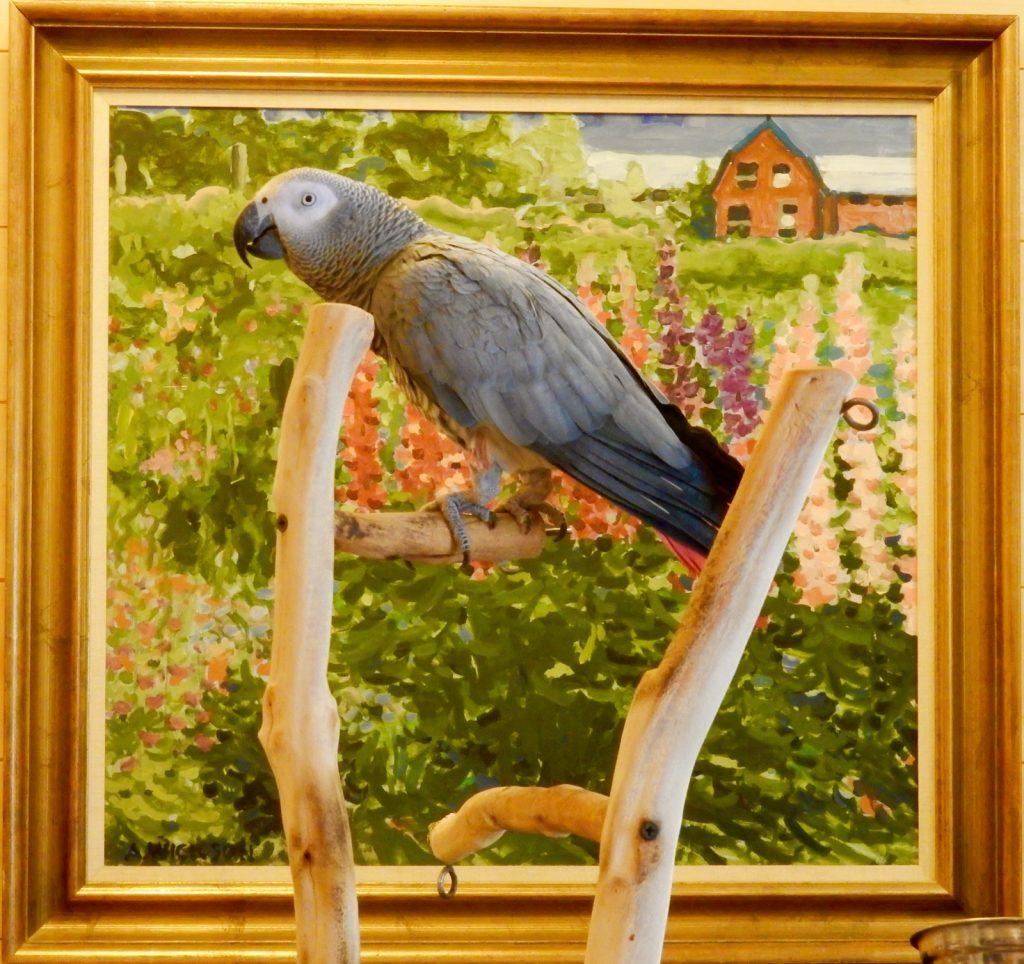 Deets - African Grey Parrot - Migis Lodge ME