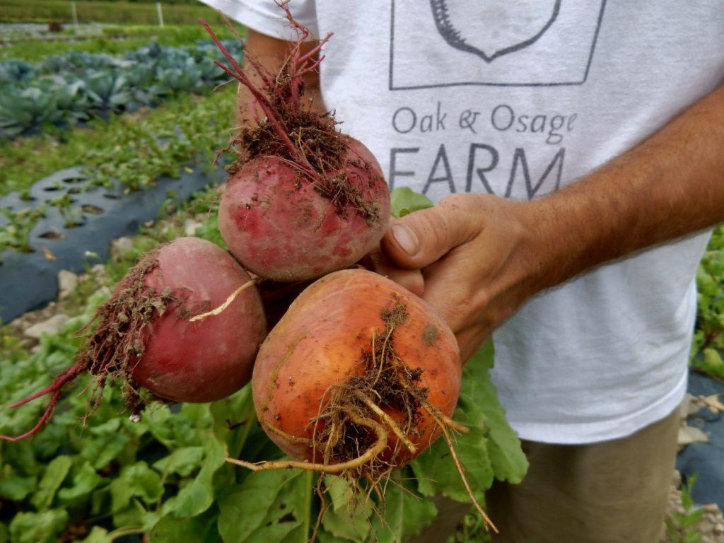 Beets Oak and Osage Farm Hammondsport NY