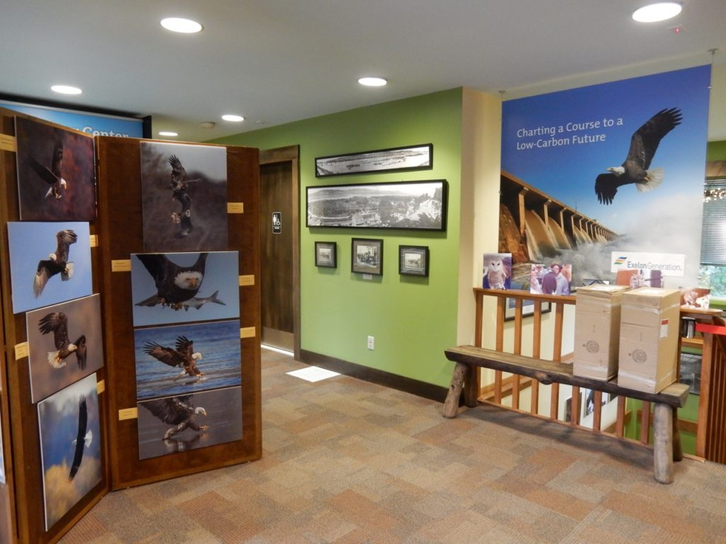Eagle Photos, Conowingo Dam Visitors Center MD