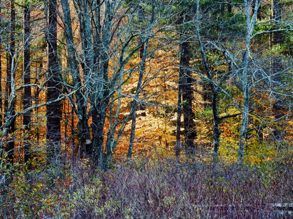 Late Fall at Chatfield Hollow State Park in Killingworth CT on a Romantic Getaways in New England