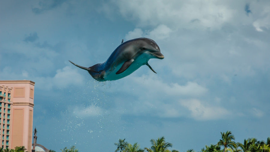 Nassau Bahamas Flying Dolphin