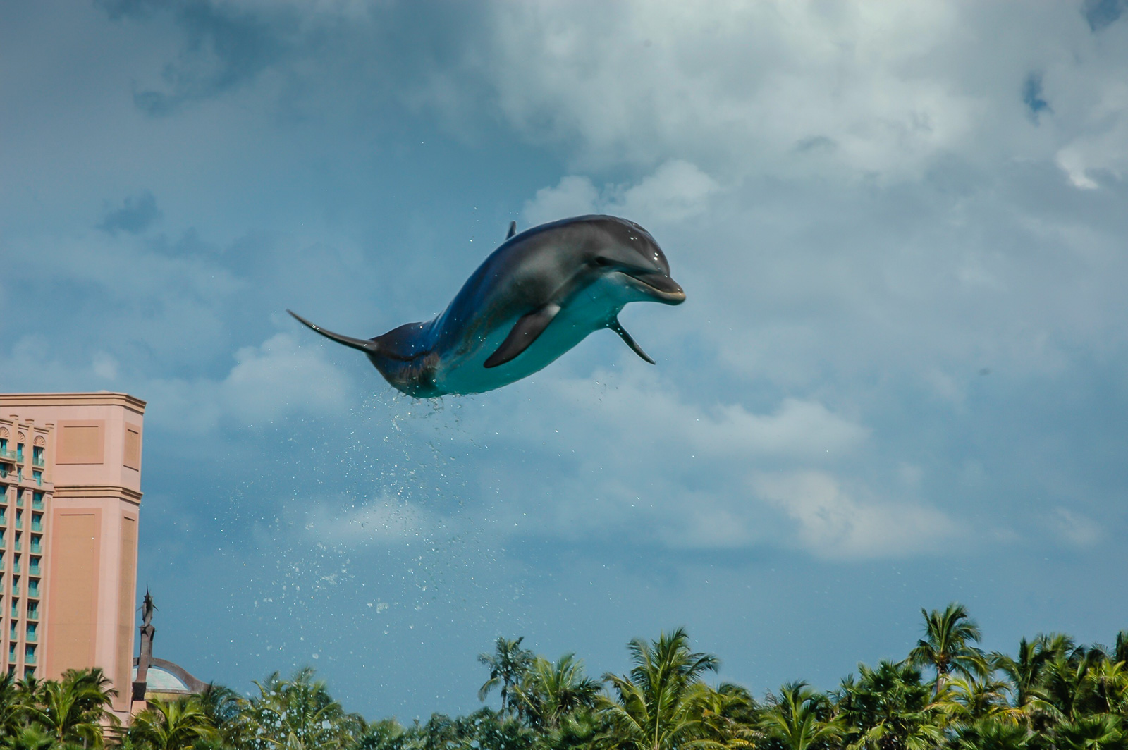 Nassau Bahamas Flying Dolphin