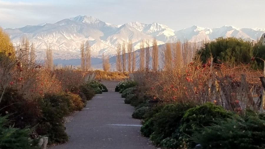 Cavas Wine Lodge, Mendoza Region, Argentina – Relais & Chateaux in the Midst of Malbec Country