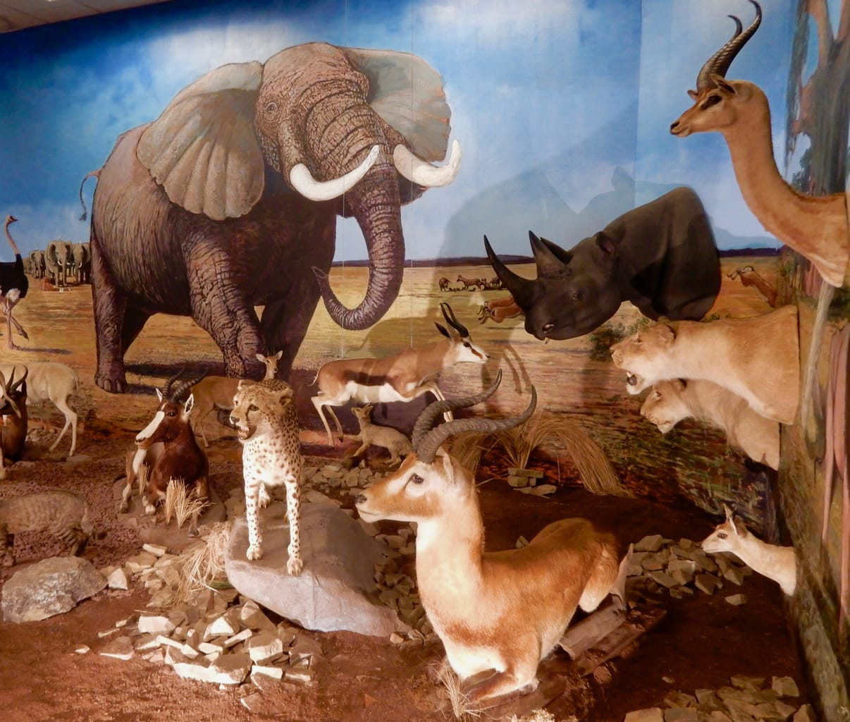 African Animal Diorama Nixon County Park Nature Center York PA
