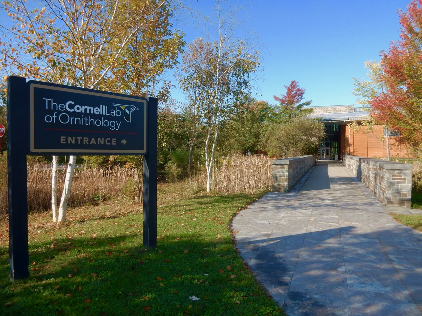 The Cornell Lab of Ornithology Ithaca NY