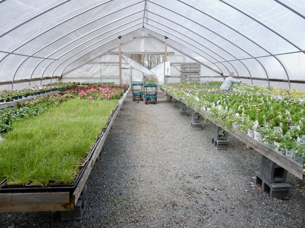 Interior Rhodes Greenhouses Henderson NY