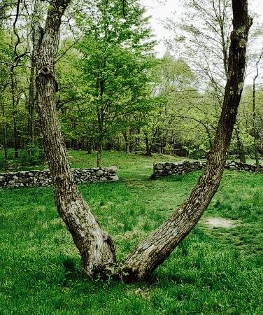 Weir Farm NHP Grounds CT
