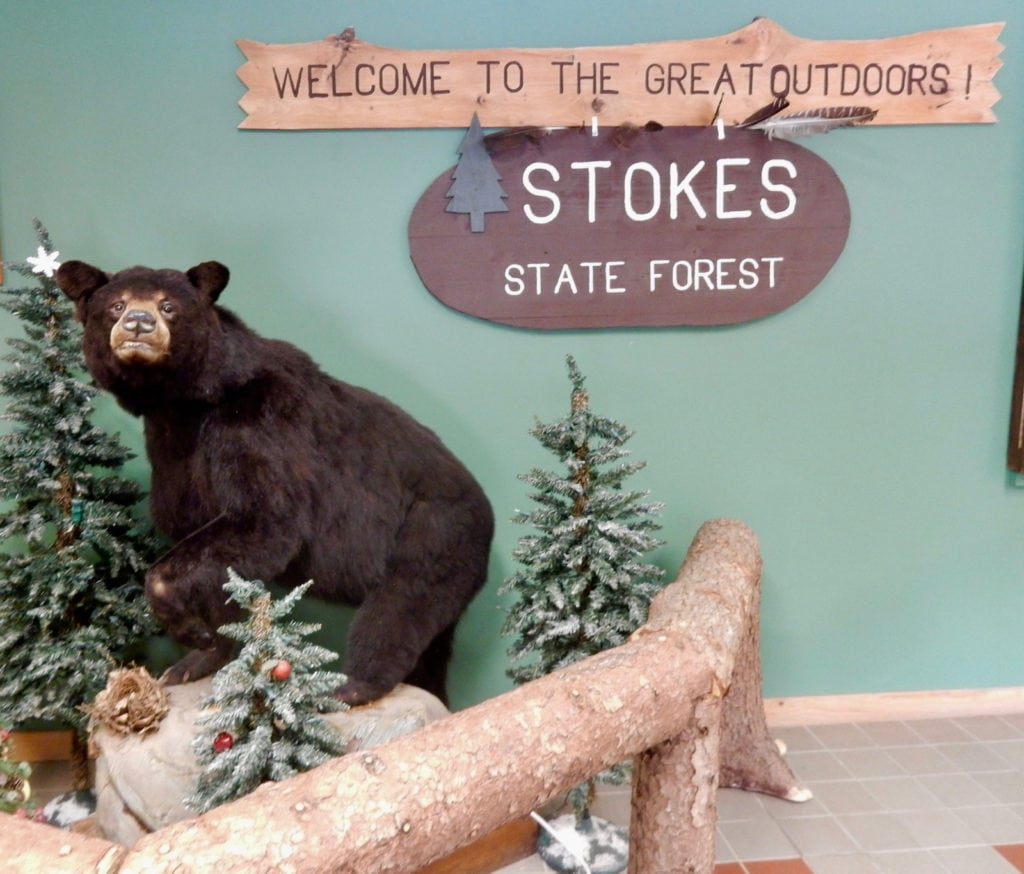 Mounted bear diorama at Stoke State Park NJ Office