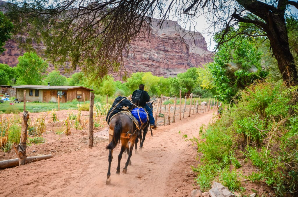 Mule pack enters Supai Village.