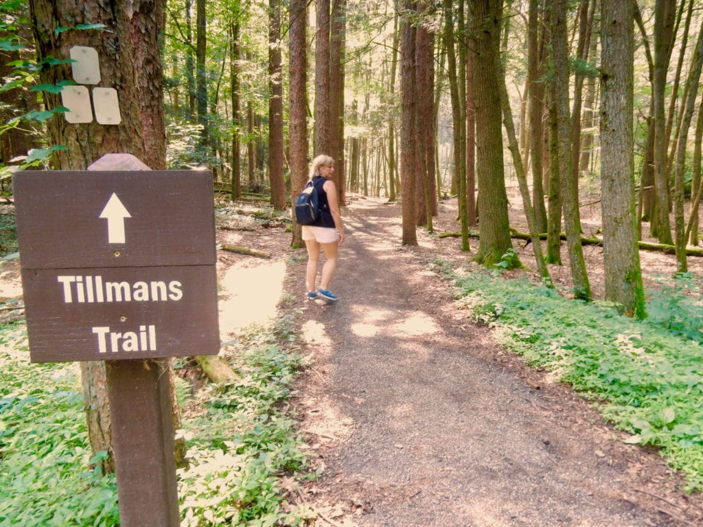 Tillmans Ravine Trail Stokes State Forest NJ