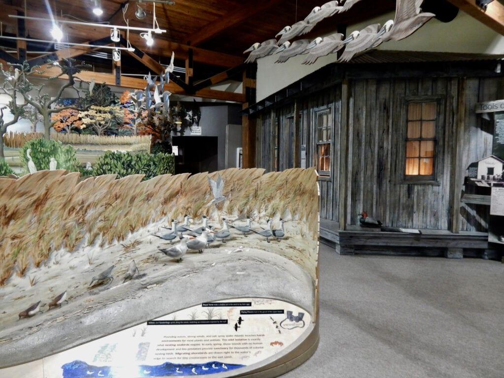 Exhibit Eastern Shore Virginia National Refuge Visitors Center