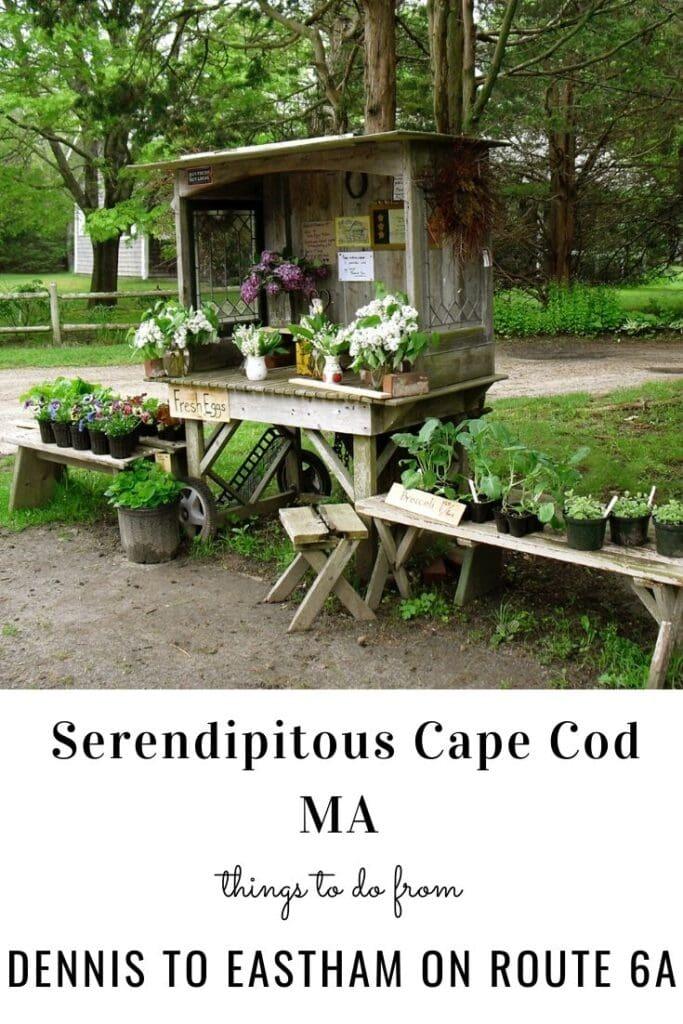 Cape Cod Pin