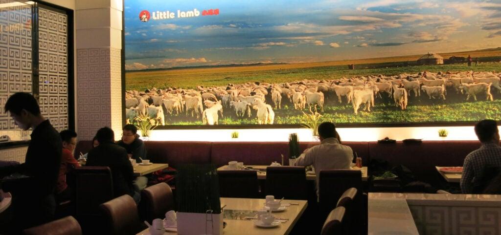 Little Lamb Skyview Mall Flushing NY
