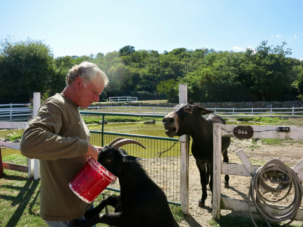 """Animal rescuer, """"Doc"""" Willis, at his farm, Beacon Hollow - just off the Greenway on Beacon Hill Rd., Block Island"""