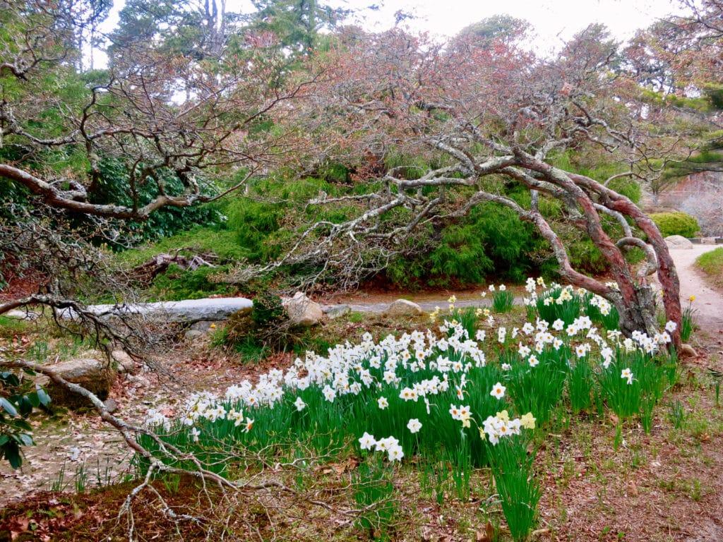 Mytoi Gardens Chappaquiddick MA