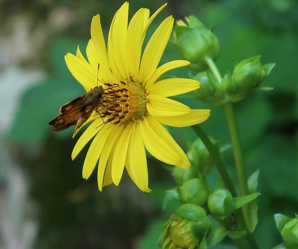 Bowmans Hill Wildflower Preserve Bucks County PA