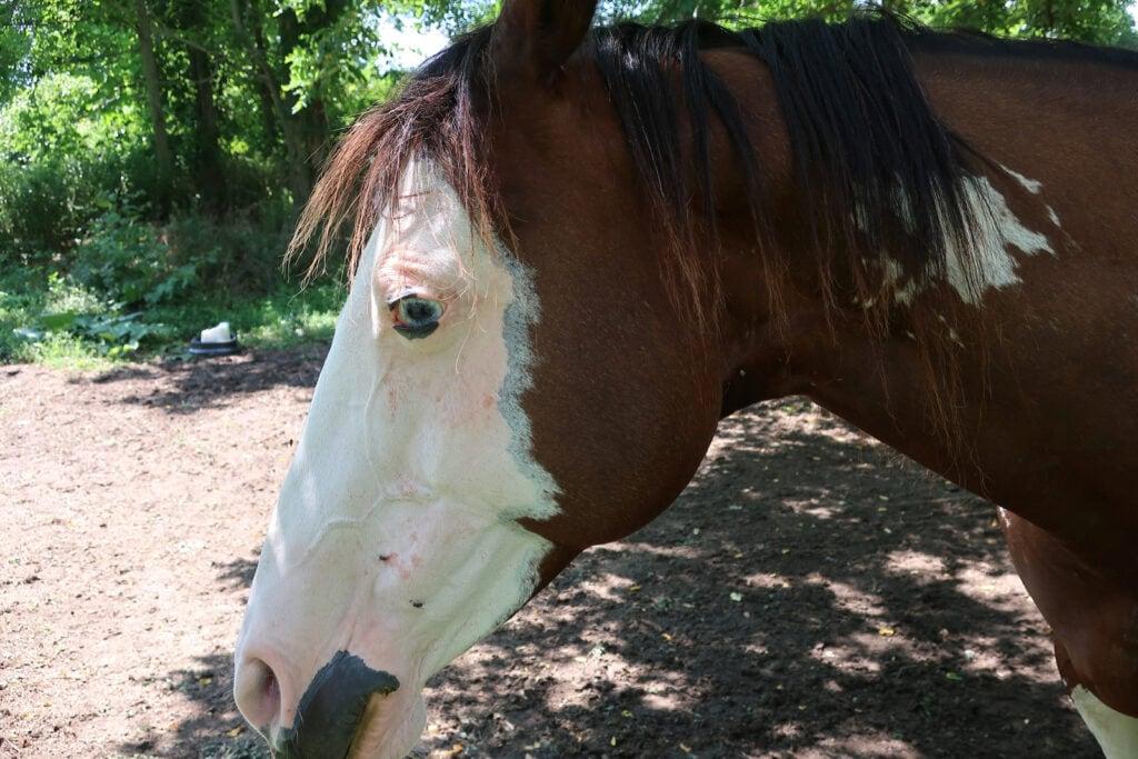 Blue eyed Martha Mountain Valley Farm NY