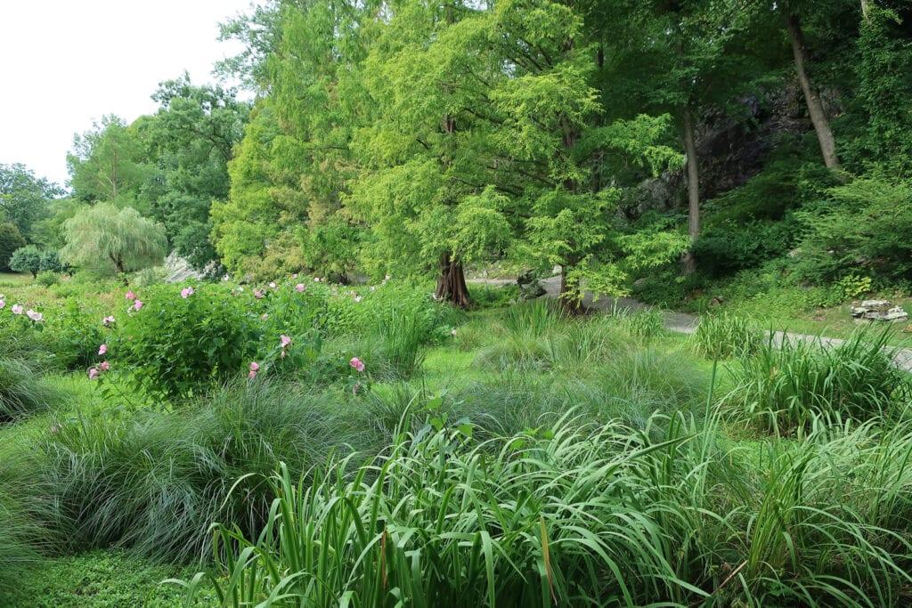 Bog grasses Innisfree Garden NY
