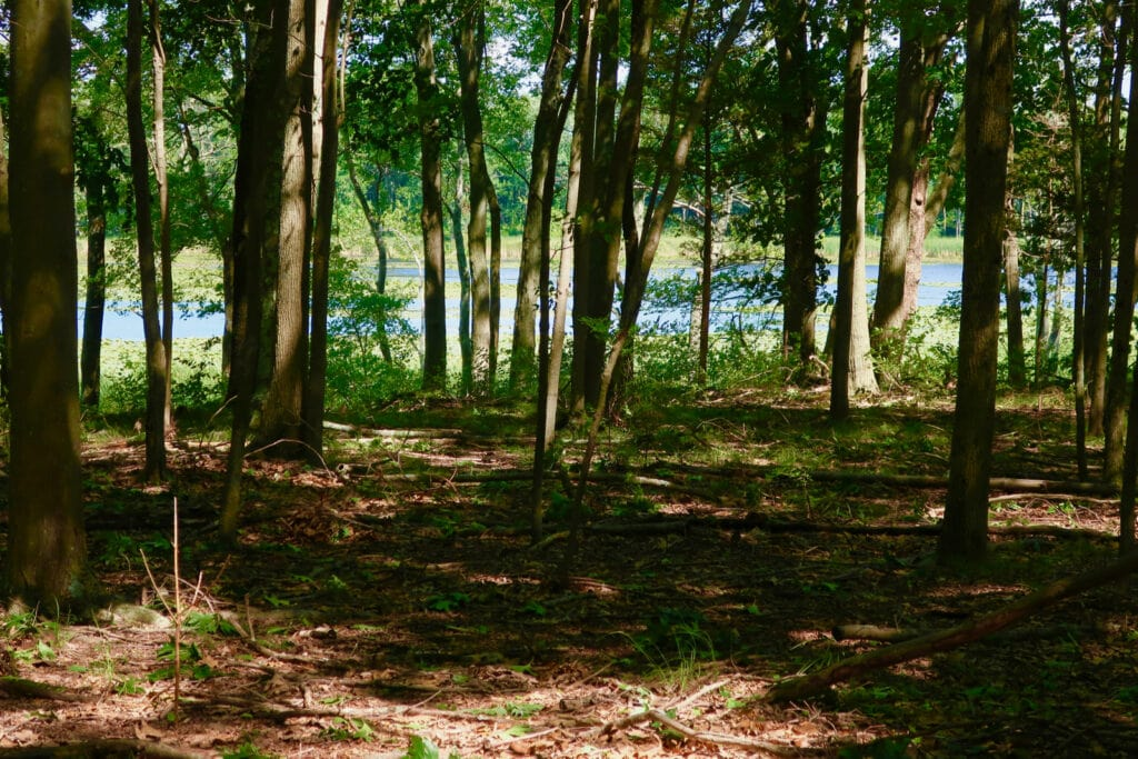 Thompson Pond Pine Plains NY