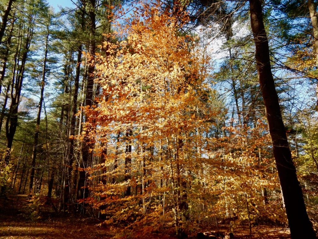 Chatfield Hollow State Park CT in fall foliage