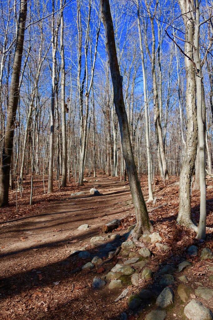 Bartlett-Arboretum-Trail-Stamford-CT