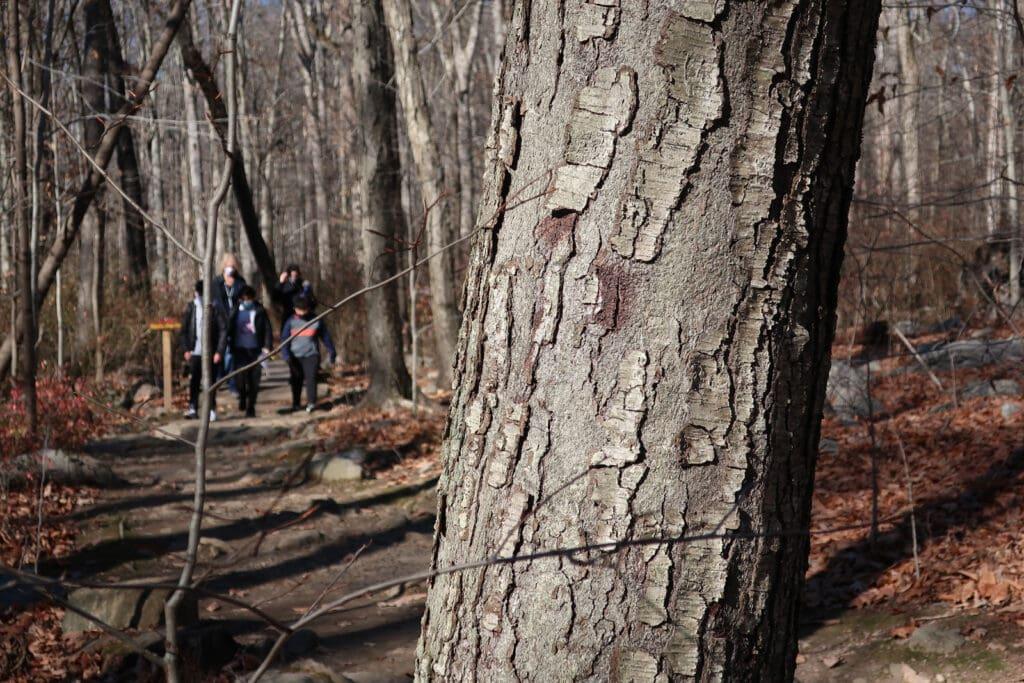 Bartlett-Arboretum-Visitors-Stamford-CT