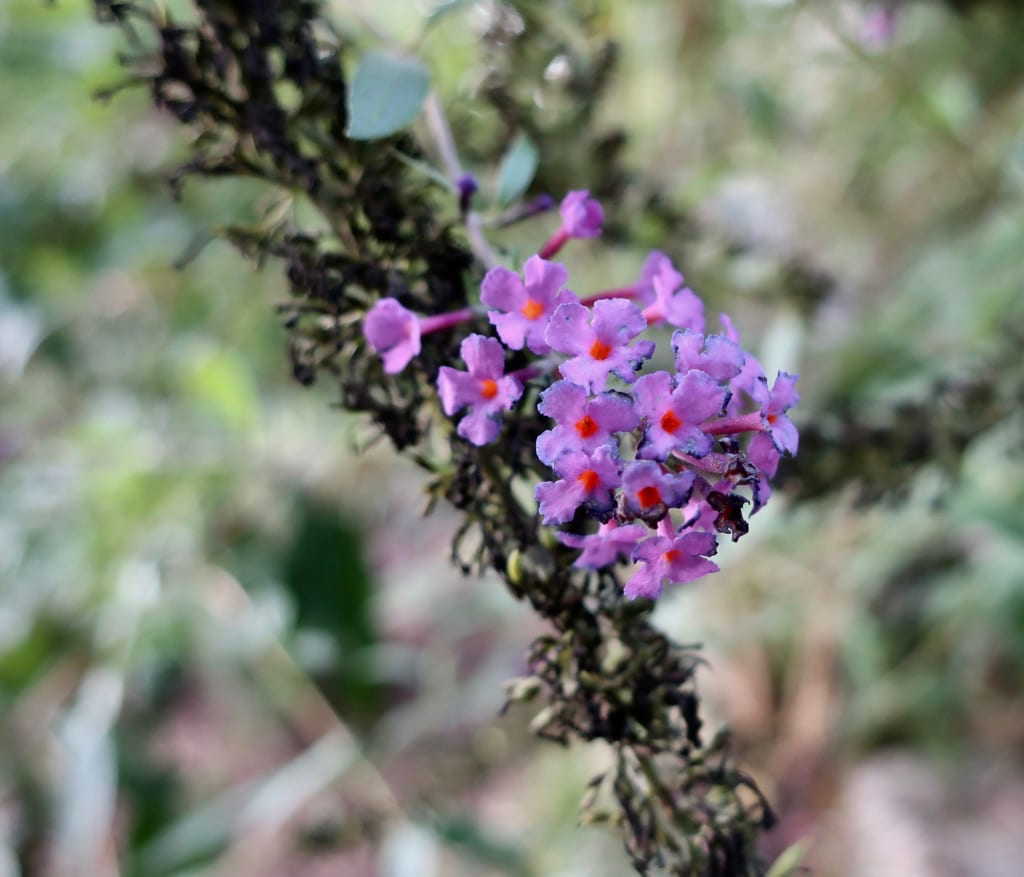 Flowers in Northeast US
