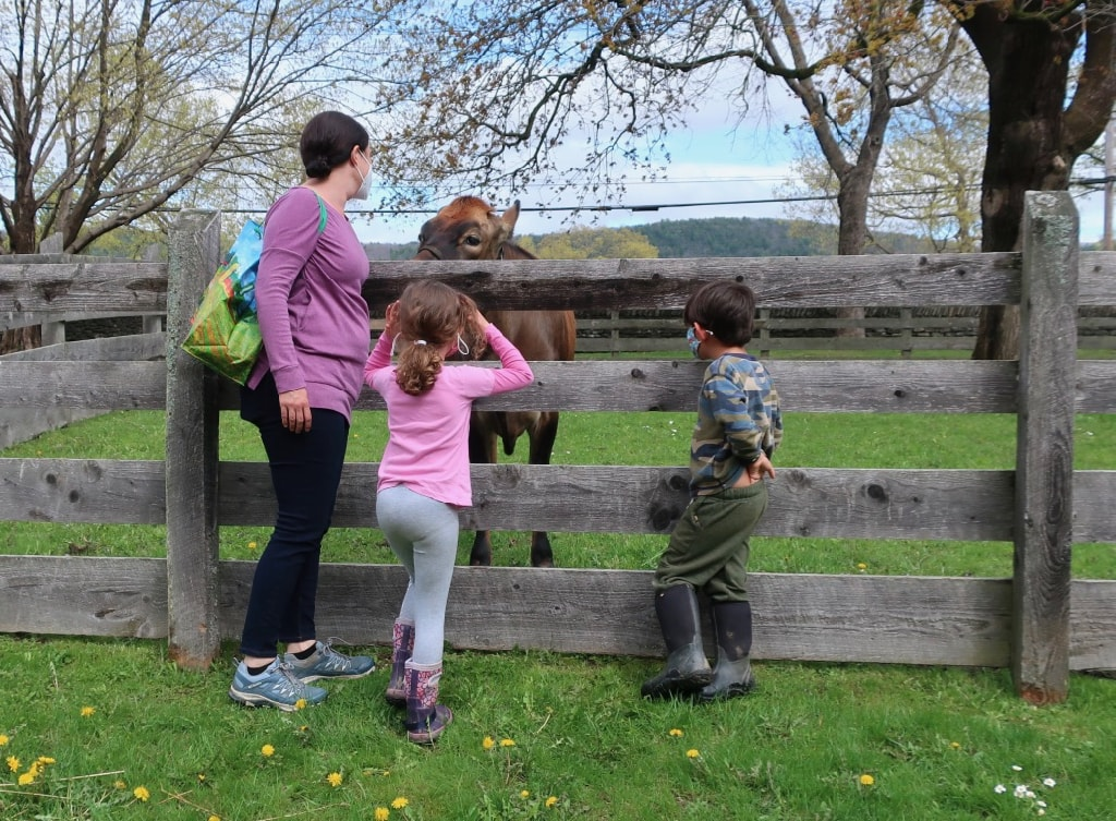 Family with resident friendly cow Farmers Museum Cooperstown NY