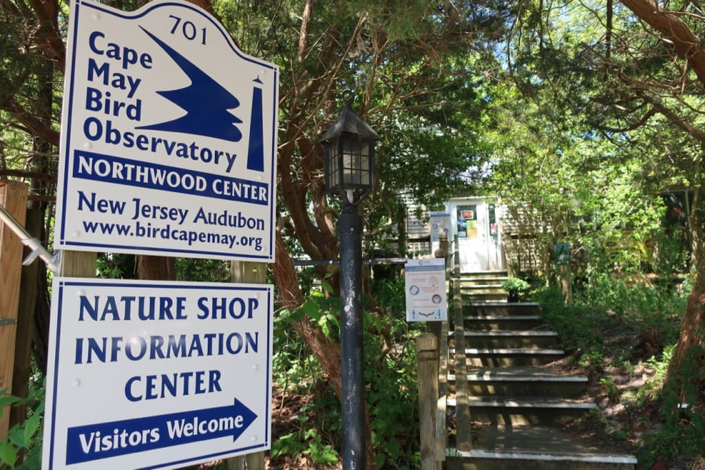 Find out the latest migration info at Cape May Bird Observatory NJ Audubon