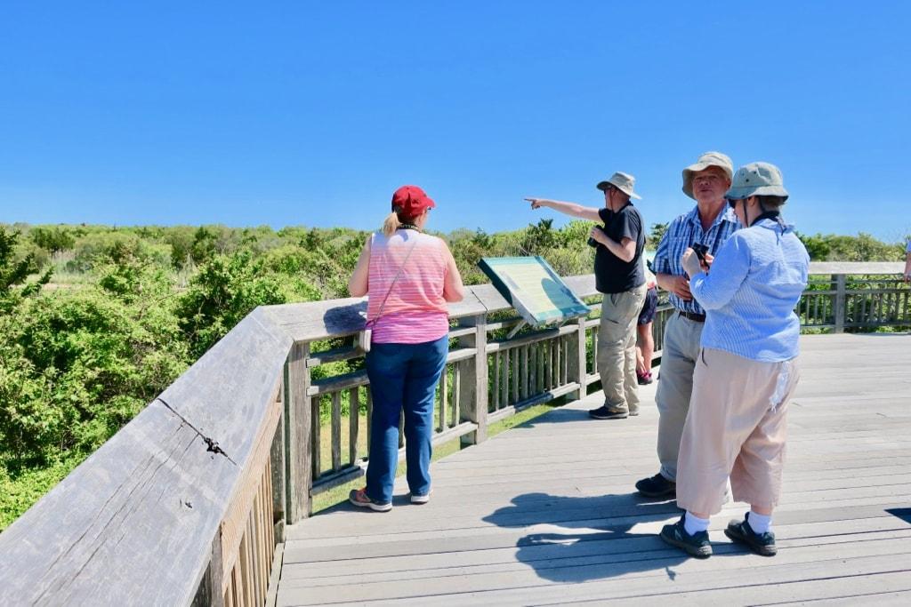 Birding in Cape May NJ