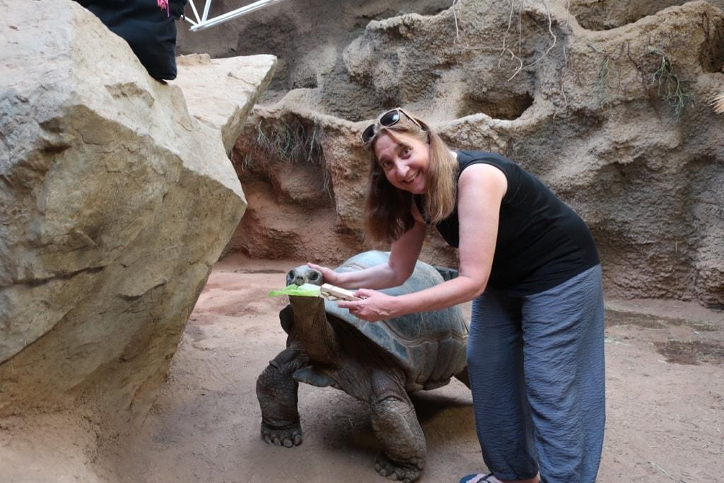 Meet and Greet Gentle Giants Tortoises at Reptiland Allenwood PA