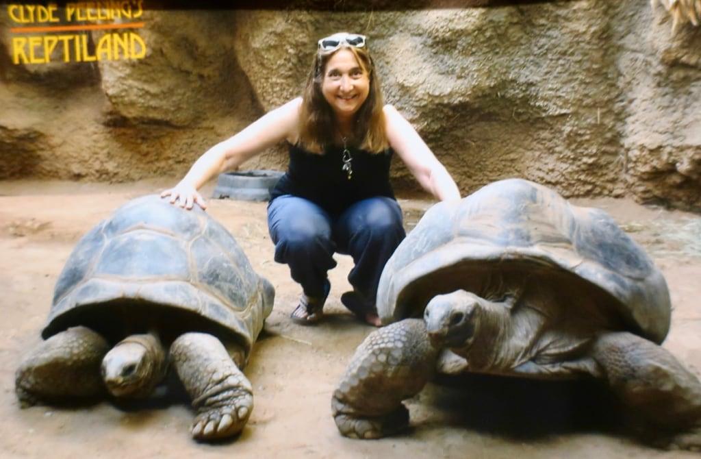 Tortoise Encounter at Clyde Peelings Reptiland PA