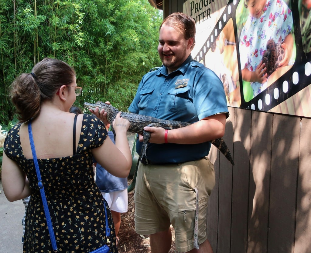 Petting a young alligator at Clyde Peelings Reptiland Central PA