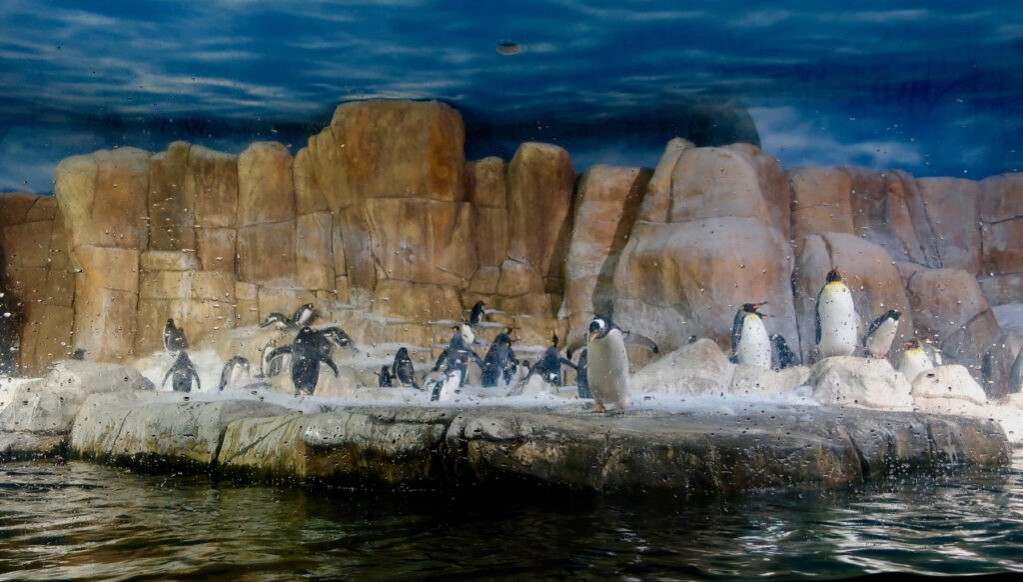 Penguins at Henry Doorly Zoo and Aquarium Omaha