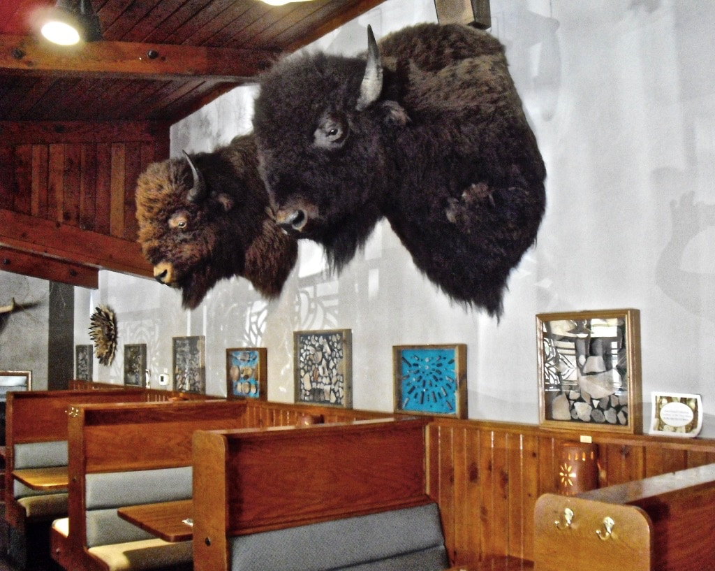 Buffalo heads over tables at Pepper Pod Restaurant Hudson CO