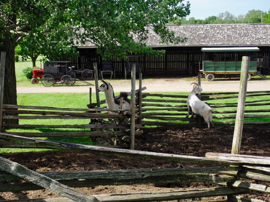 Animals greet visitors to the Barns of Napponee home of Amish Acres Indiana Route 6